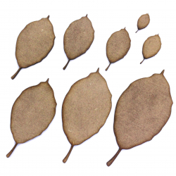 Beech Leaf Craft Shape
